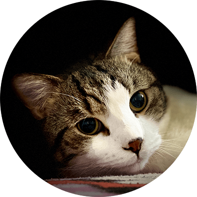 cat feeding home visit 5 star review