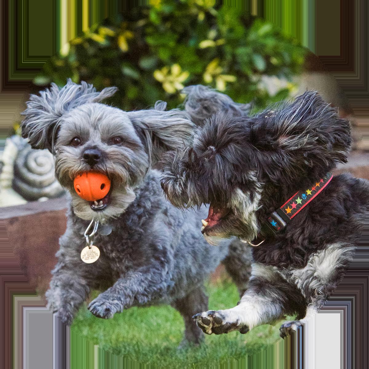 dog running fitness service romford essex