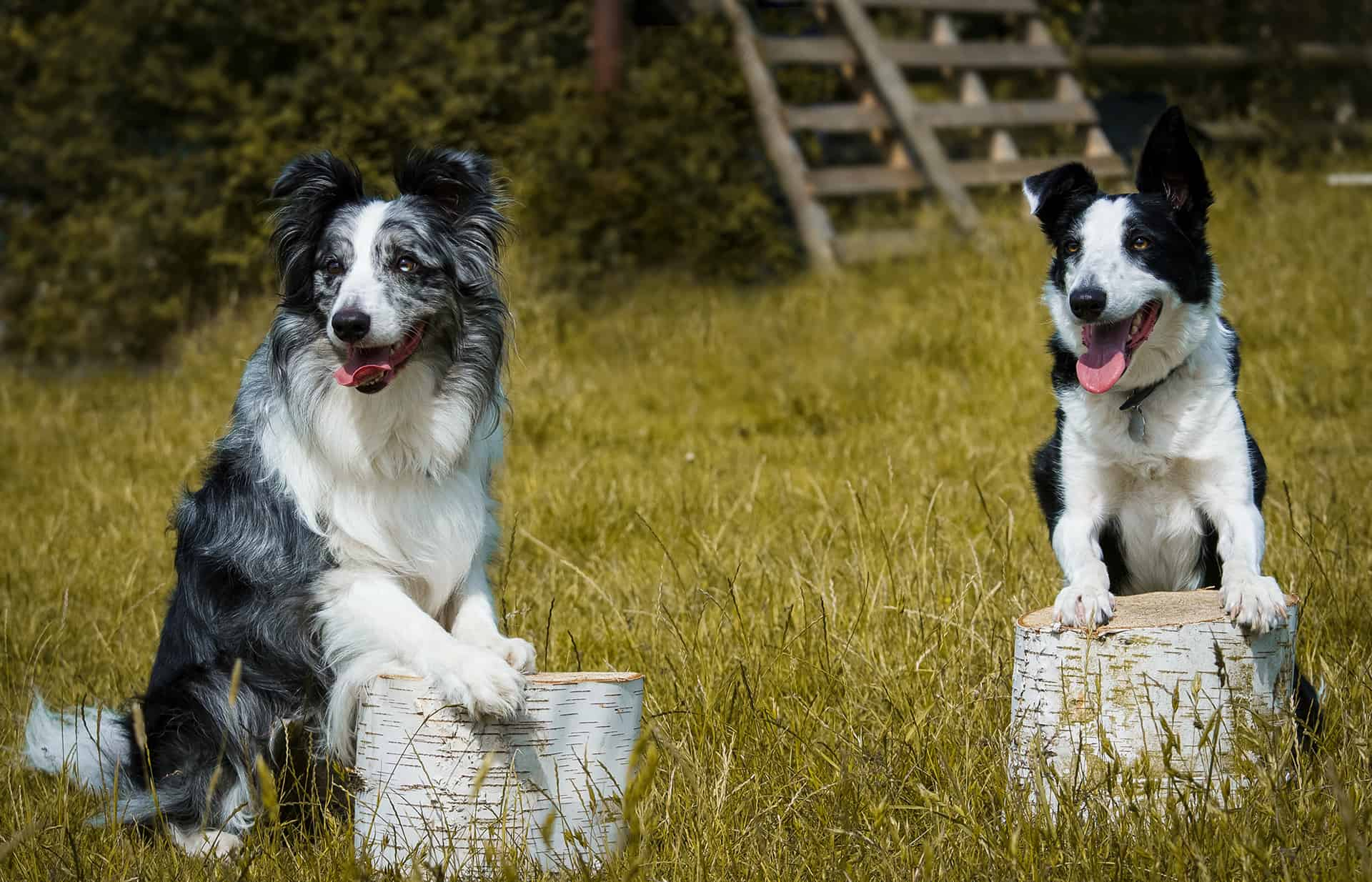 essex dog running service Prices start at £25….ready to book Get in touch with us today.