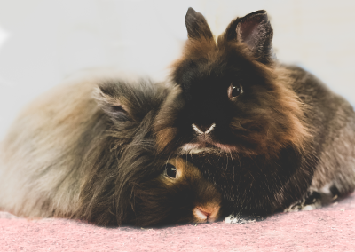 pet rabbitt photographer service